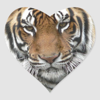 Hi-Res Tigres in Contemplation Heart Sticker