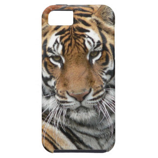 Hi-Res Tigres in Contemplation iPhone 5 Cases