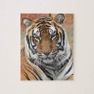 Hi-Res Tigres in Contemplation Jigsaw Puzzle