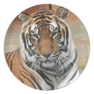 Hi-Res Tigres in Contemplation Party Plate