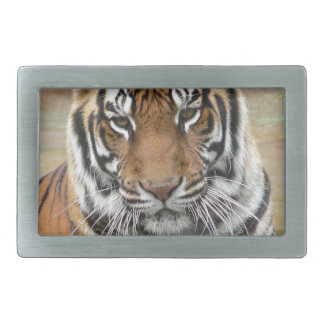 Hi-Res Tigres in Contemplation Rectangular Belt Buckle