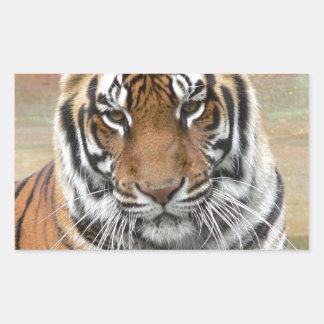 Hi-Res Tigres in Contemplation Rectangular Sticker