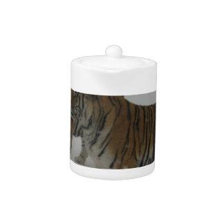 Hi-Res Two Siberian Tigers