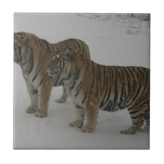 Hi-Res Two Siberian Tigers Ceramic Tile