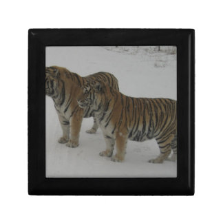 Hi-Res Two Siberian Tigers Gift Box