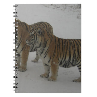 Hi-Res Two Siberian Tigers Notebook