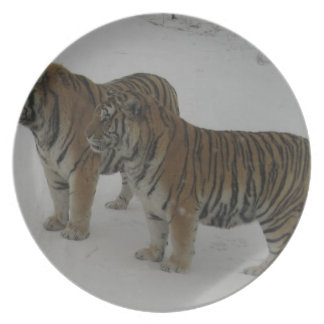 Hi-Res Two Siberian Tigers Plate