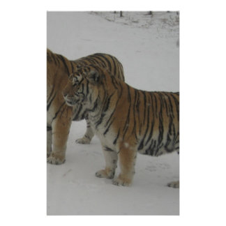Hi-Res Two Siberian Tigers Stationery