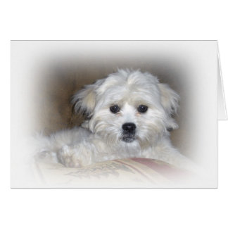 Hi There!  Faded Shih Poo Puppy Card