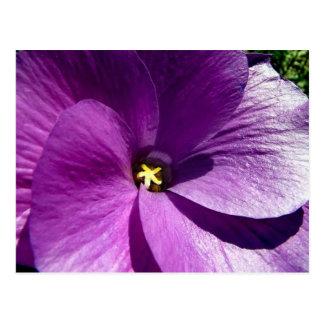 hibiscus 13 postcard
