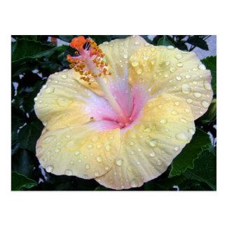 hibiscus 16 postcard