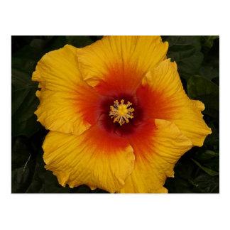 hibiscus 18 postcard