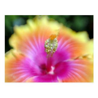 hibiscus 19 postcard