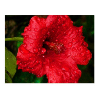 hibiscus 22 postcard
