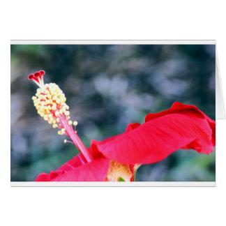 Hibiscus 4 cards
