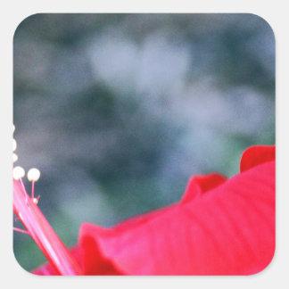 Hibiscus 4 square sticker