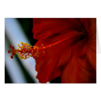 Hibiscus Delicious Card