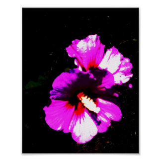 Hibiscus Flower 4 Poster