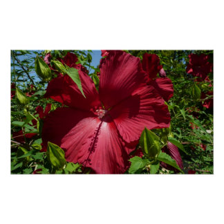 Hibiscus Flower and Blue Sky Tropical Floral Poster