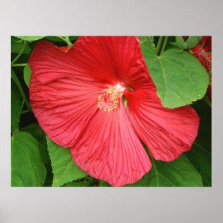Hibiscus Flower Bright Magenta Floral Poster