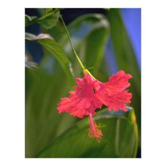 Hibiscus Flower Flyer