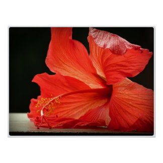 Hibiscus. Flower papo Poster