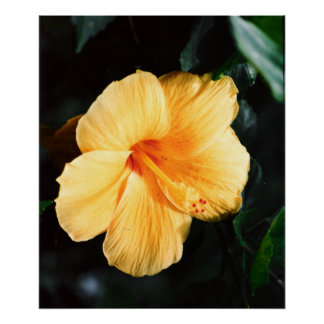 Hibiscus Flower Photograph Wall Decor Poster