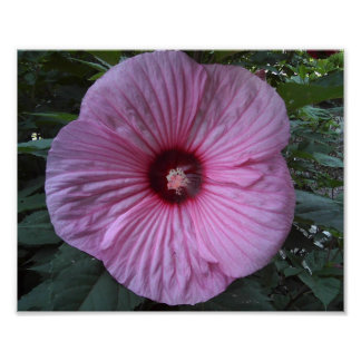 Hibiscus Flower - poster
