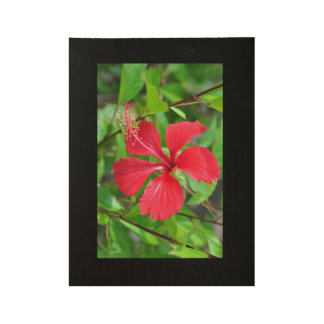 HIbiscus Flower Wood Poster