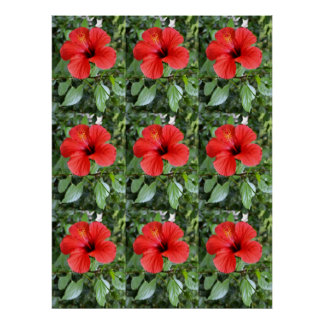 Hibiscus flowers poster
