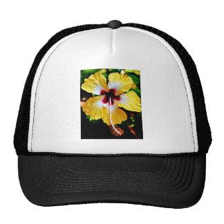 Hibiscus Hats