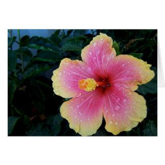 Hibiscus Hawaiian Flower Card