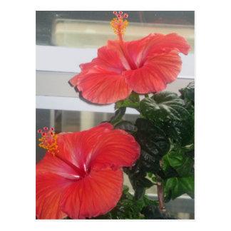 Hibiscus House Plant Postcard