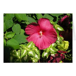 Hibiscus in sunlight card