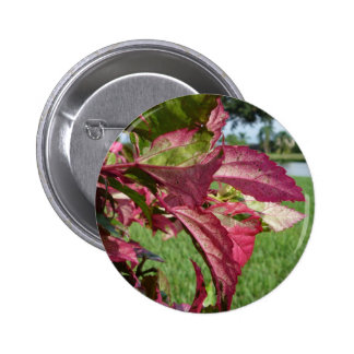 Hibiscus Leaves Fire and Ice Pinback Button