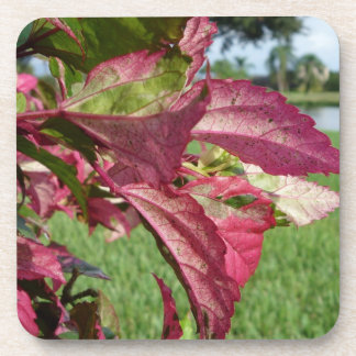 Hibiscus Leaves Fire and Ice Beverage Coaster