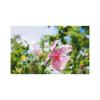 Hibiscus Nature, trees, flowers, bright. Canvas Print