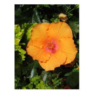 Hibiscus Orange Postcard