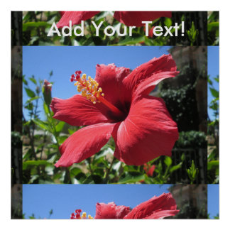 Hibiscus Red Flower Poster