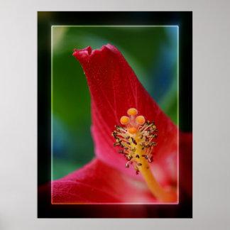 Hibiscus Stigma Poster