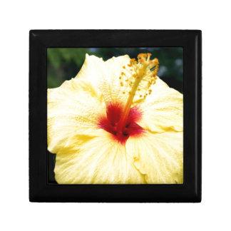 Hibiuscus Gift Box