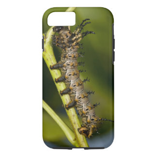 Hickory horned devil caterpillar (Citheronia iPhone 7 Case