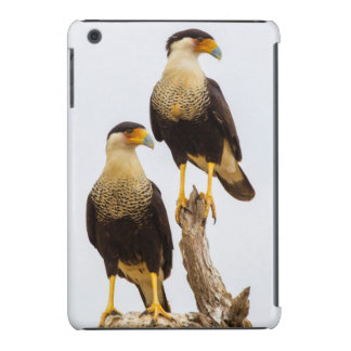 Hidalgo County. Adult Crested Caracara iPad Mini Retina Covers