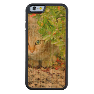 Hidden Domestic Cat with Alert Expression Carved Cherry iPhone 6 Bumper Case