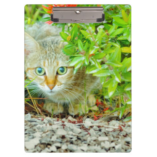 Hidden Domestic Cat with Alert Expression Clipboard