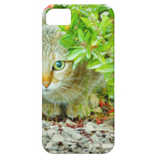 Hidden Domestic Cat with Alert Expression iPhone 5 Case