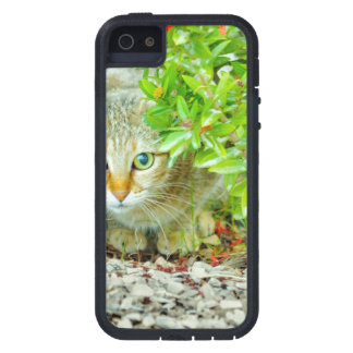 Hidden Domestic Cat with Alert Expression iPhone 5 Covers