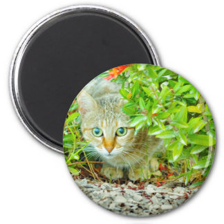 Hidden Domestic Cat with Alert Expression Magnet