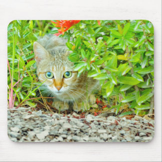 Hidden Domestic Cat with Alert Expression Mouse Pad