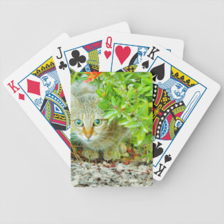 Hidden Domestic Cat with Alert Expression Poker Deck